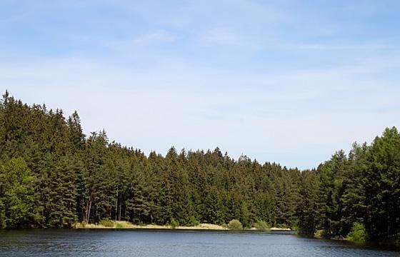 Erholung im Waldviertel: Kamptalstausee. Naturschutzgebiet!