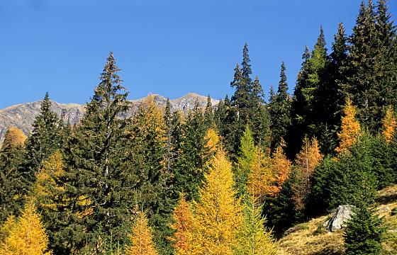 Herbstaufnahme - Osttirol