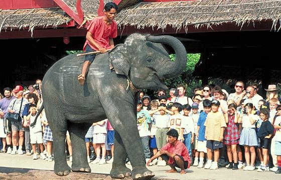 Thailand: Touristen-Show mit Elefanten