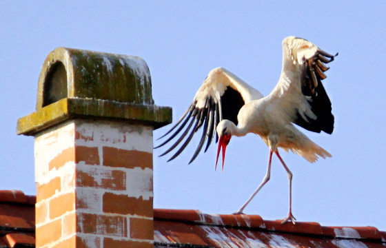 Rust: Storch balanciert am Dach