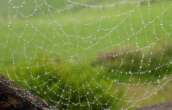 Regentropfen am Spinnennetz