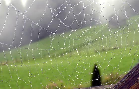 Glitzernde Regentropfen im Spinnennetz