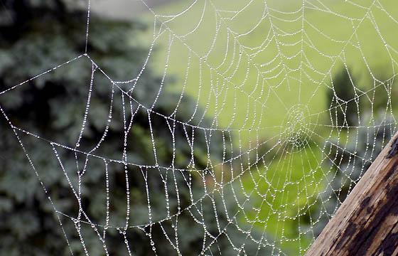 Spinnennetz mit vielen kleinen Regentropfen