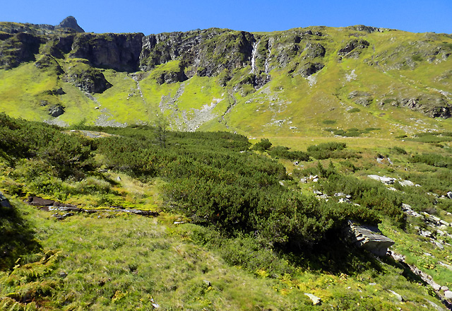 Weißsee Gletscherwelt - Latschenkiefer - Vegetation, felsformationen