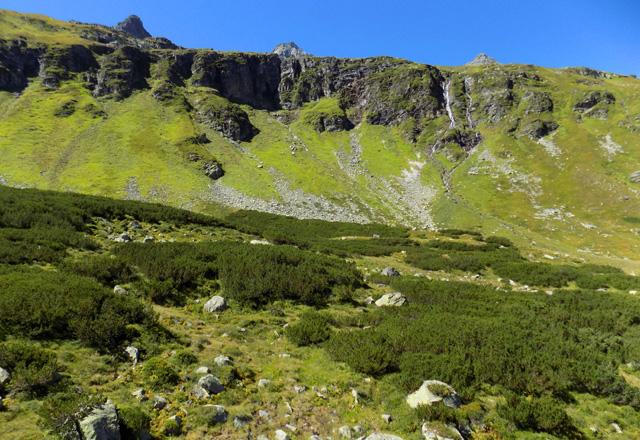 Weißsee Gletscherwelt - Vegetation mit Latschenkiefern u. Bergwiesen